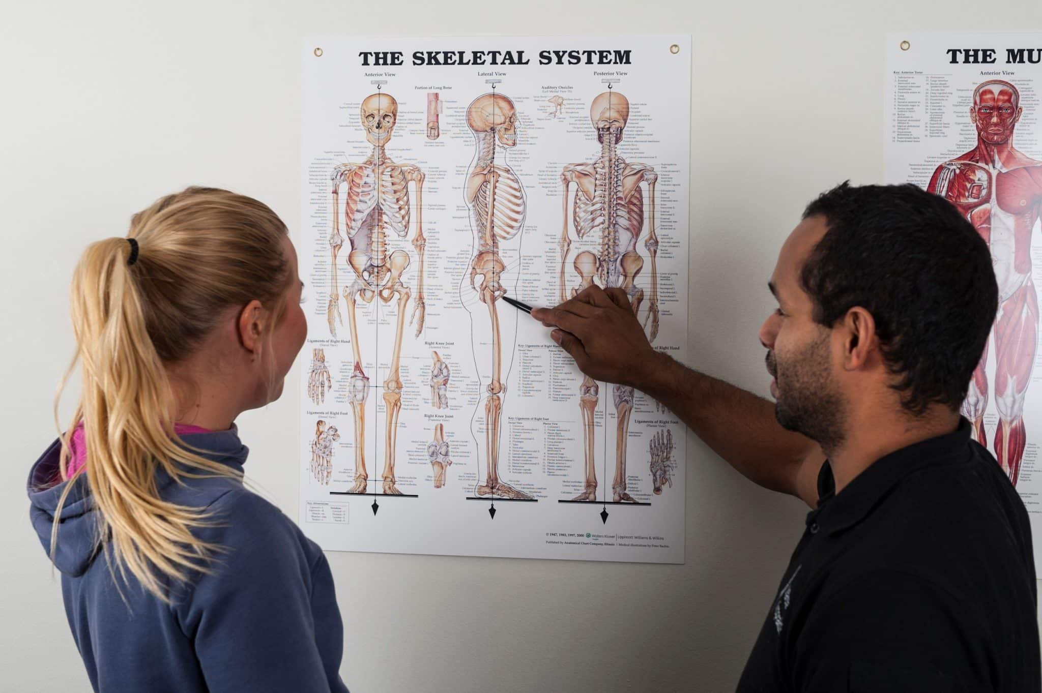 Pekar på skelettmodell